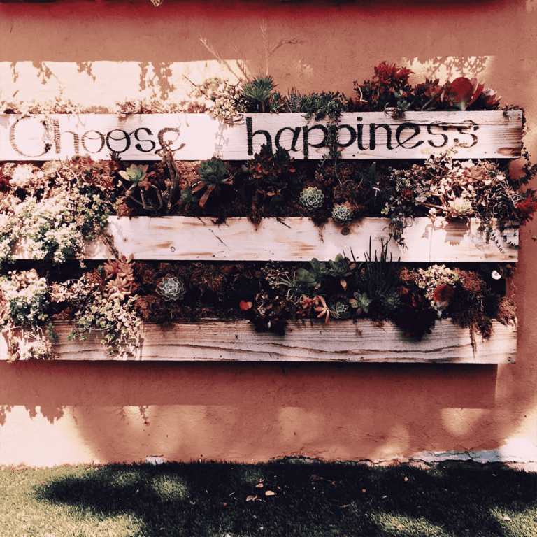 Photo of wall planter with happiness written on it